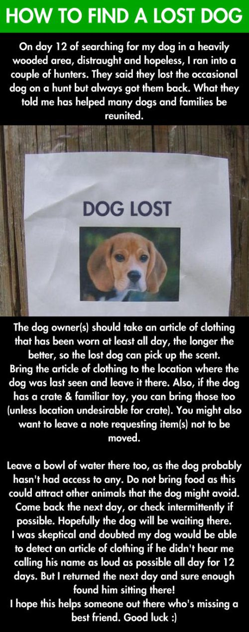 how-to-find-a-lost-dog