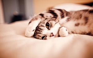 Cute-Sleeping-Kitten-Wallpapers-Desktop