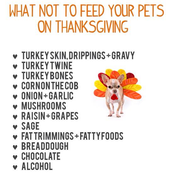 what-not-to-feed-your-pets-on-thanksgiving