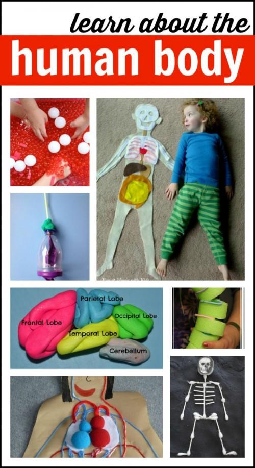 Human-Body-Activities-for-Kids-500x917