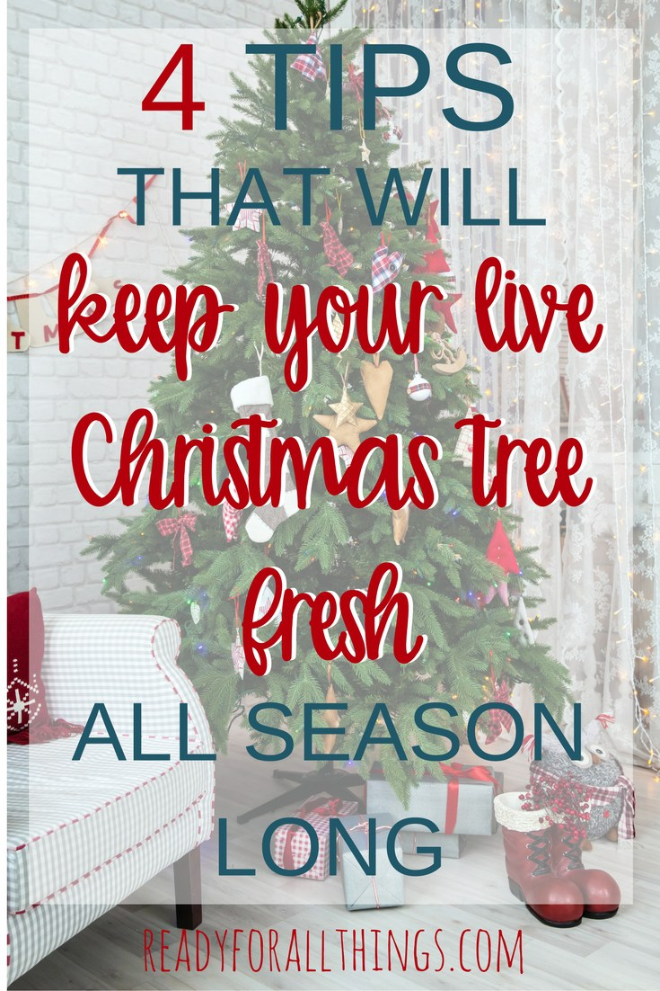 4-tips-christmas-tree.jpg