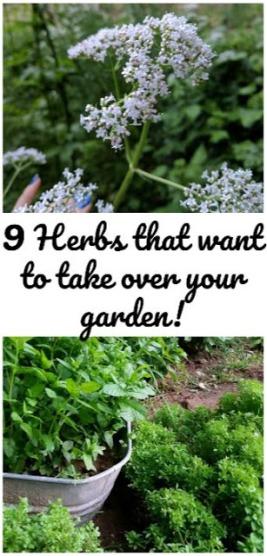 Invasive herbs