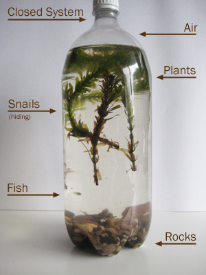 bottle-ecosystem_labeled