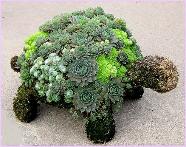 fabartdiy-DIY-Succulent-Turtle-Tutorial-Video-2