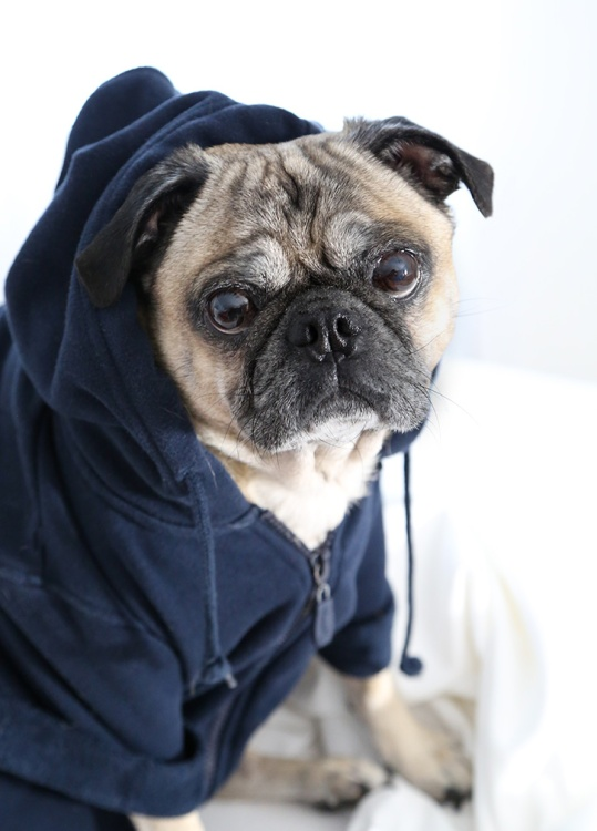 Confetti-Fix-Dog-Hoodie-Biscuit-Beauty-2-2