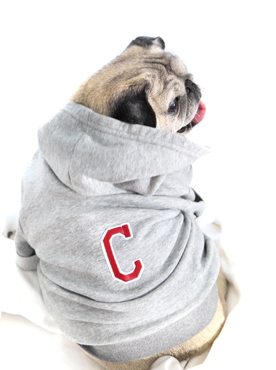 Confetti-Fix-Dog-Hoodie-Churro-Beauty-1-3