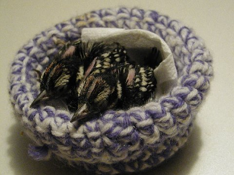 Babies_in_crochet_nest