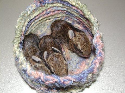 Bunnies_nest_2