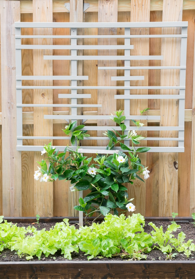 DIY-Modern-Trellis-for-Vines-3.jpg