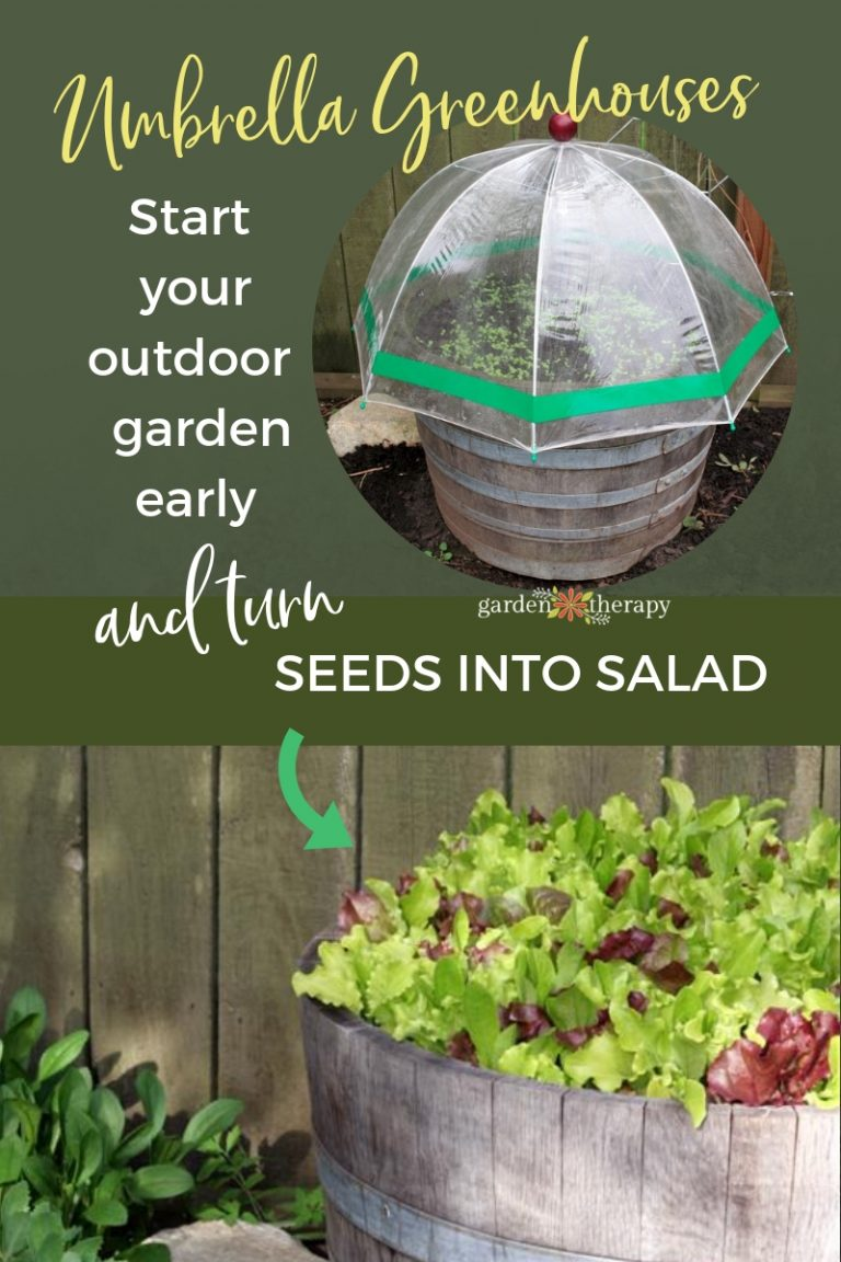 Umbrella-Mini-Greenhouses-for-Early-Vegetable-Gardening-768x1152