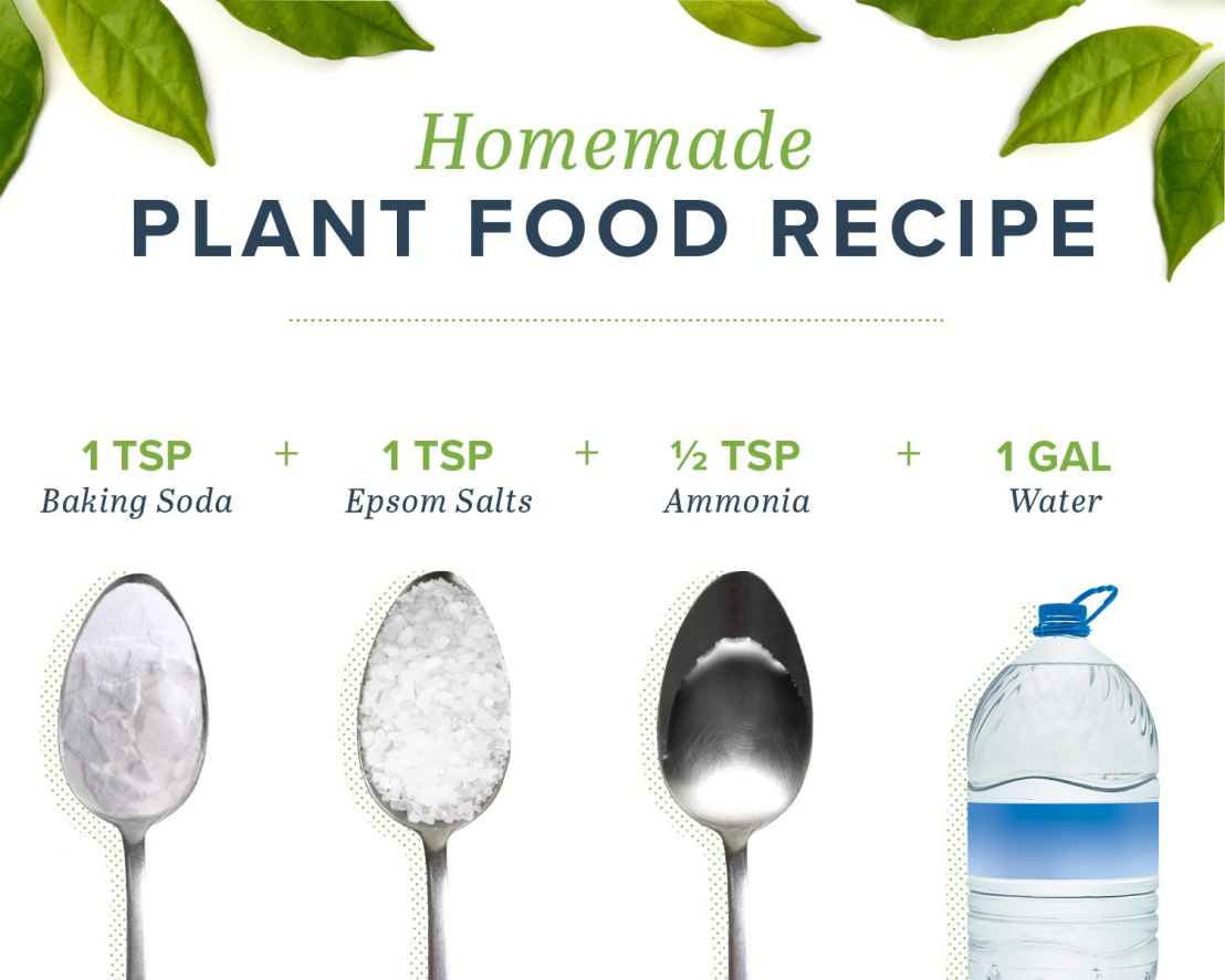 Homemade-plant-food-RECIPE-ingredients